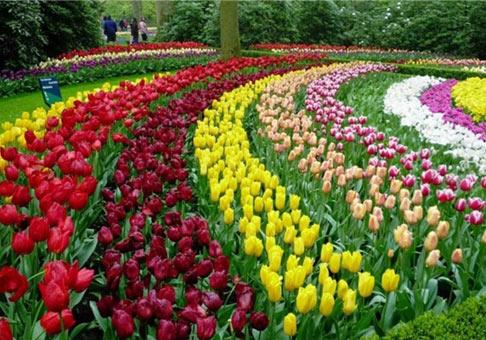 رتبه هفدهم کشور در  پرورش گیاهان زیتنی زمینه صادرات را محیا کرده است
