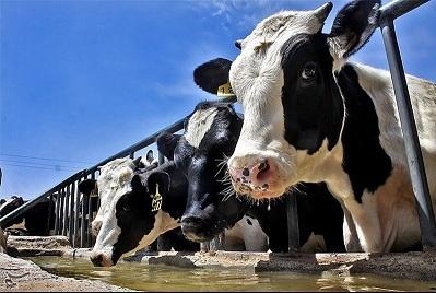 شاخص قیمت تولیدكننده گاوداری صنعتی ۱۴.۶ درصد افزایش یافت